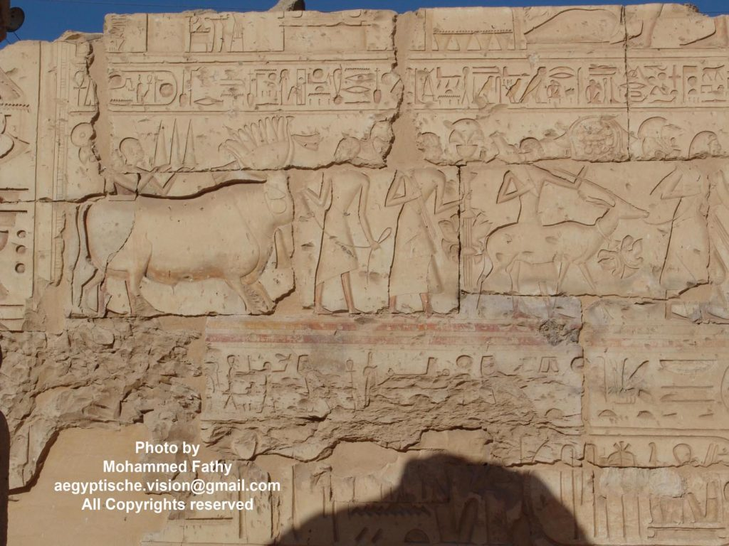 Temple of Ramses (4)
