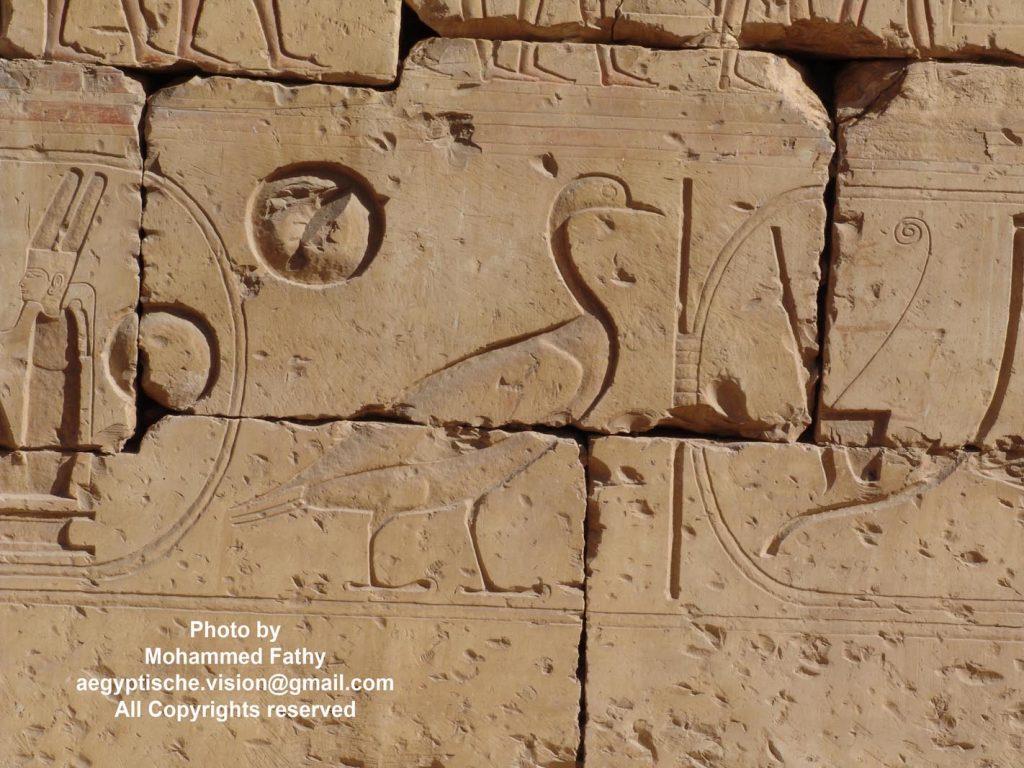 Temple of Ramses II (10)